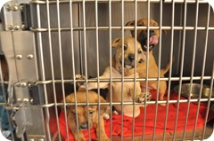 Best Friends Animal Society East Valley Shelter