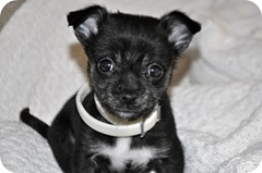 A young mixed-breed puppy looking for a home